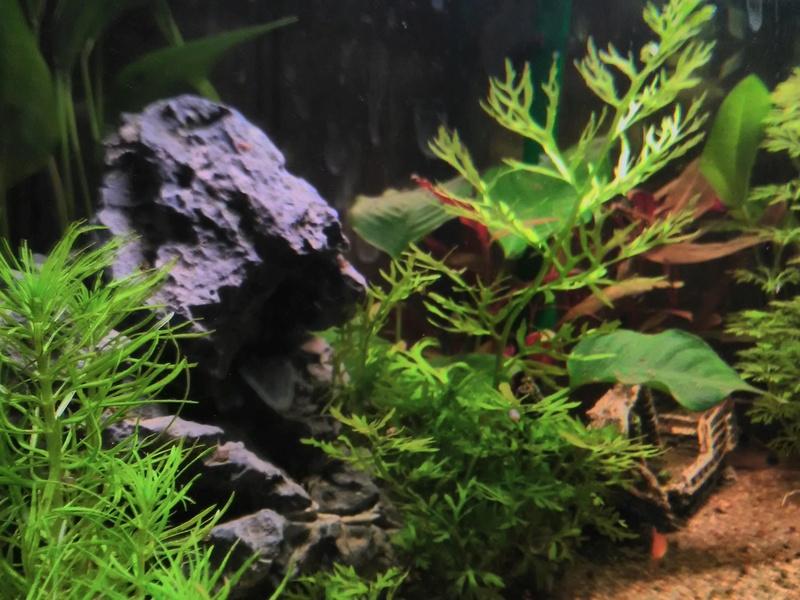 quelques photos de nos deux aquariums Img_2014