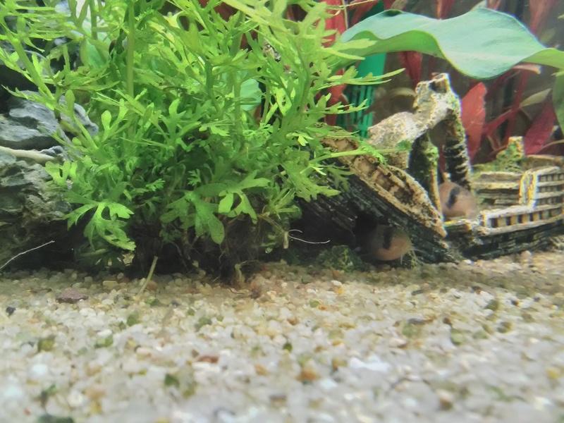 quelques photos de nos deux aquariums Img_2015