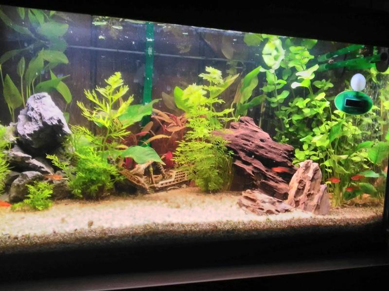 quelques photos de nos deux aquariums Img_2016