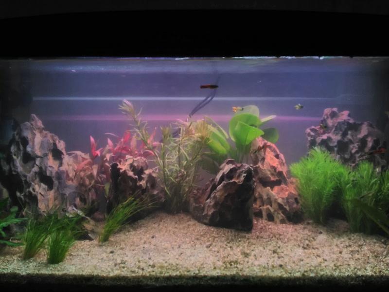 Montrez vos Aquariums Img_2017
