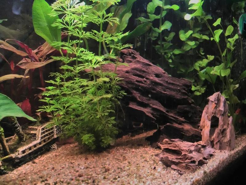 Montrez vos Aquariums Img_2019