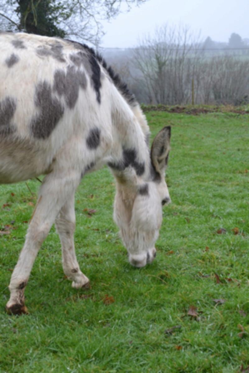 Les ânes, nos grandes oreilles adorées! Dsc_0224