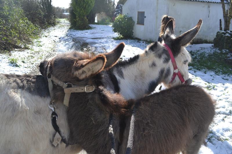Les ânes, nos grandes oreilles adorées! Dsc_0322