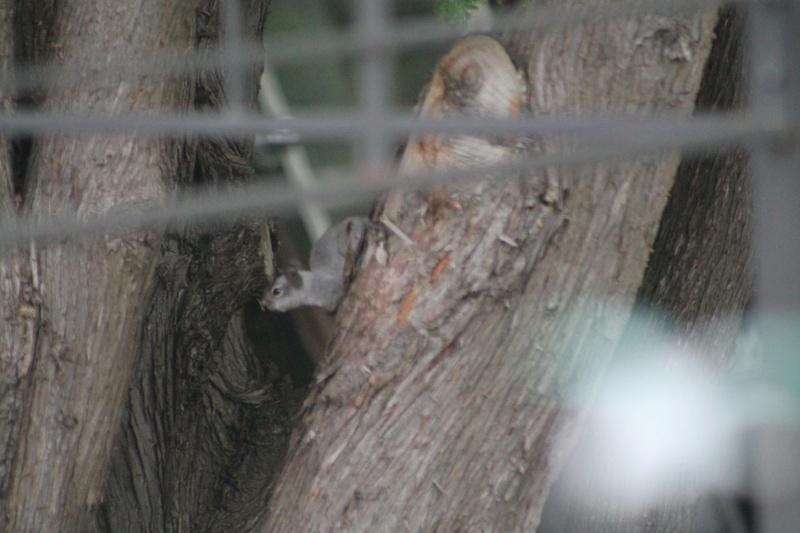 Bonjour! Pouvez-vous m'aider a identifier cet sorte d'écureuil. Merci de votre aide. Img_4251