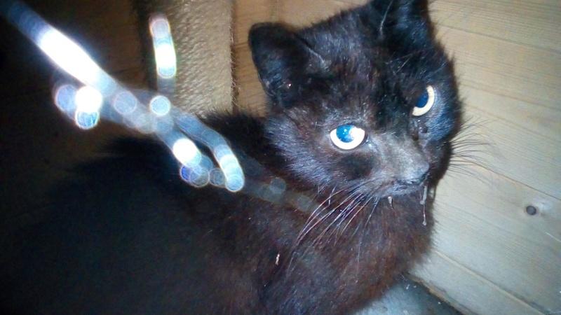 IRIS chatte noire née  01/01/2010 (disparue depuis le 15 janvier 2019) 32646810