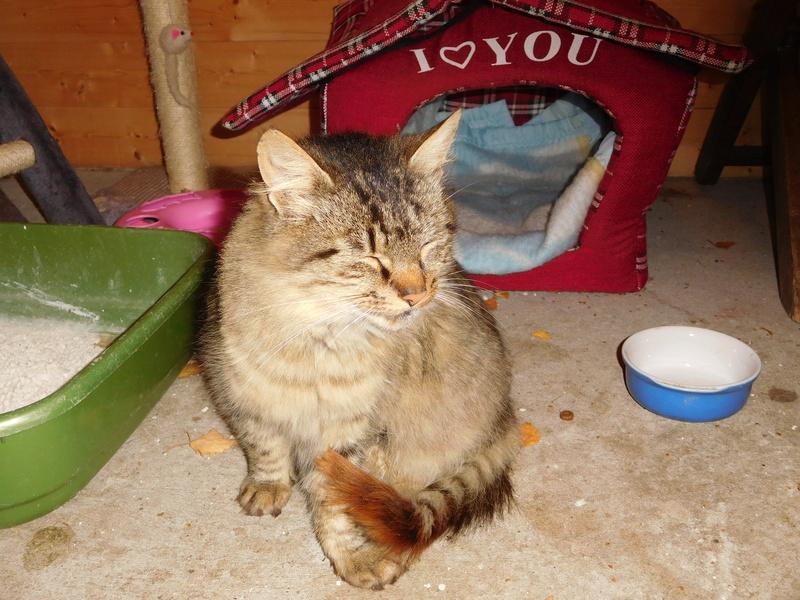 ALVIE  chatte tigrée 2 ans Dscn8111