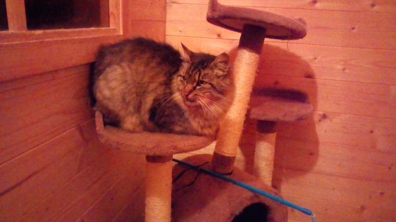 ALVIE  chatte tigrée 2 ans Img_2011
