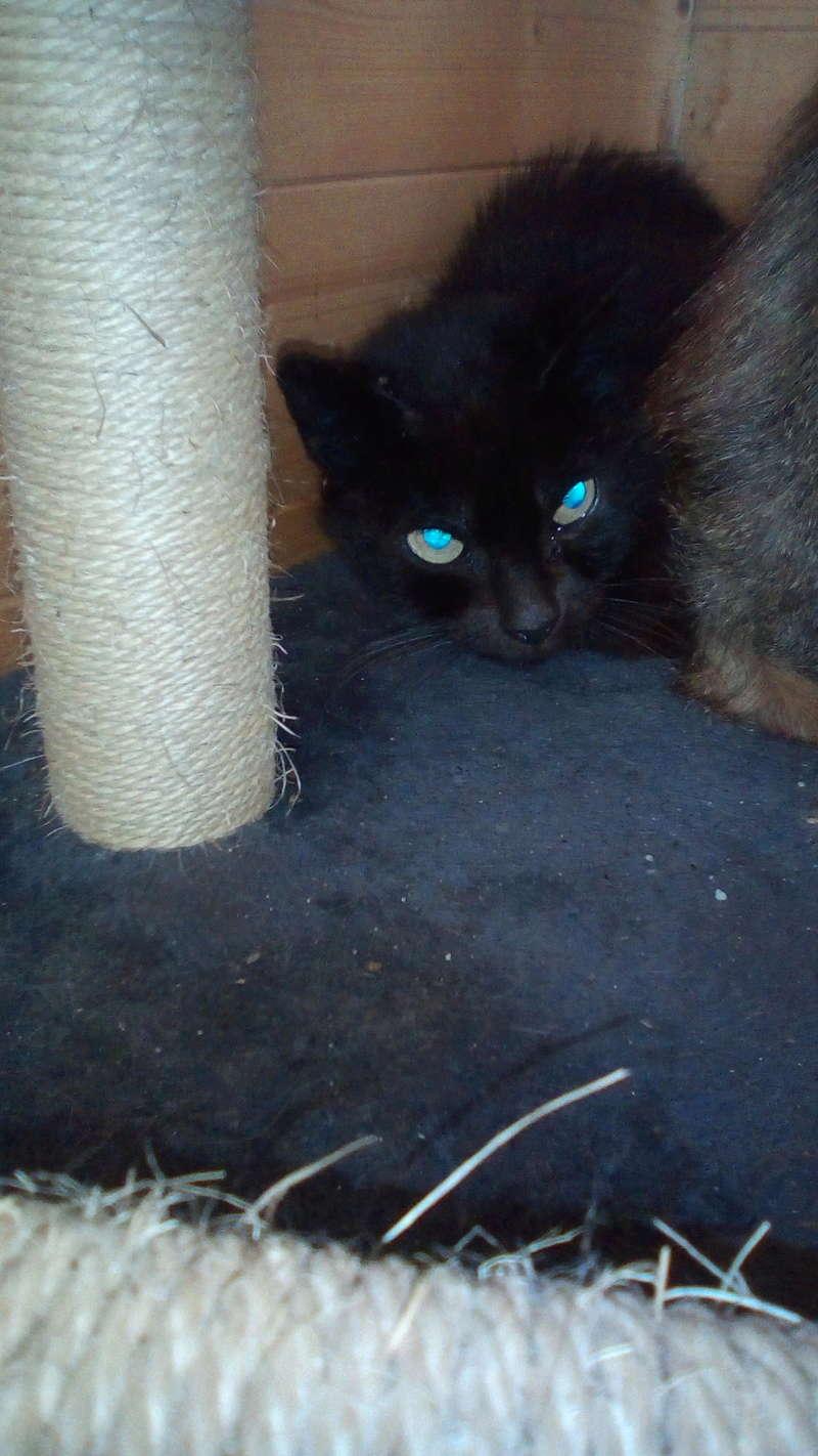 IRIS chatte noire née  01/01/2010 (disparue depuis le 15 janvier 2019) Img_2033