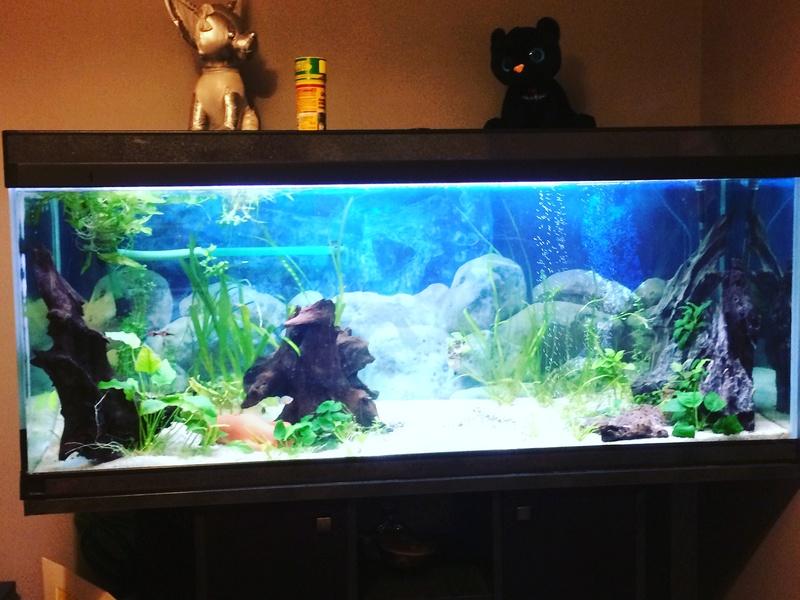Des nouvelles de mes bacs et de l'aquariophilie en général  !(avec photos) Img_0810