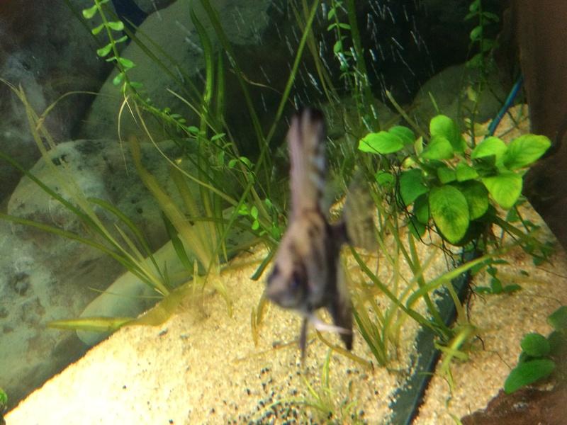 Des nouvelles de mes bacs et de l'aquariophilie en général  !(avec photos) Img_0811