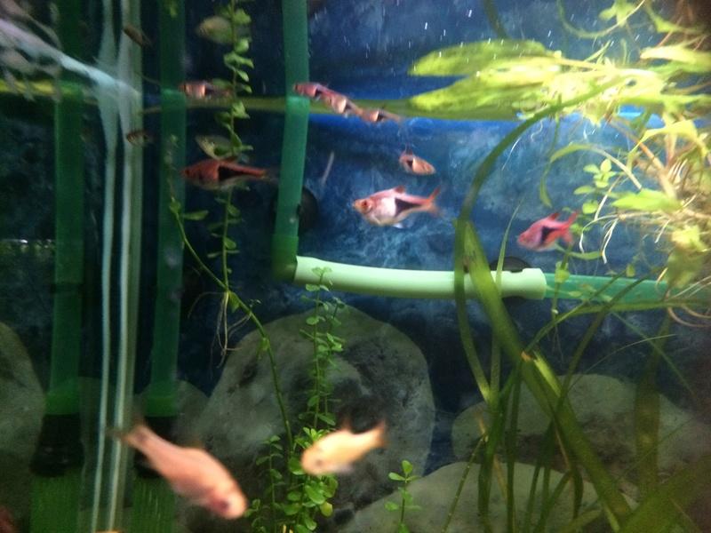Des nouvelles de mes bacs et de l'aquariophilie en général  !(avec photos) Img_0815