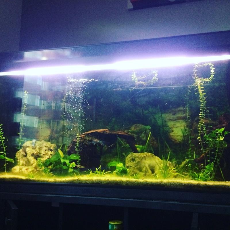 Des nouvelles de mes bacs et de l'aquariophilie en général  !(avec photos) Img_0817