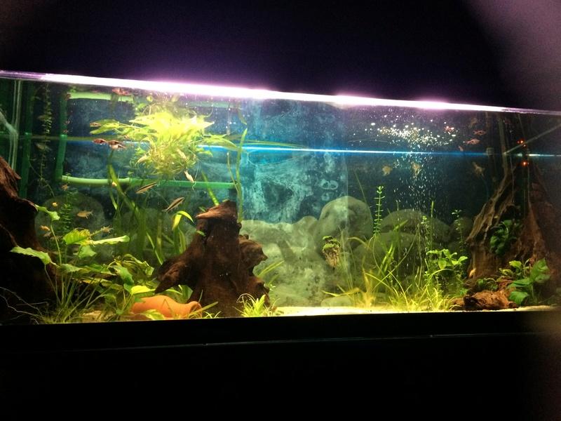 Des nouvelles de mes bacs et de l'aquariophilie en général  !(avec photos) Img_0818