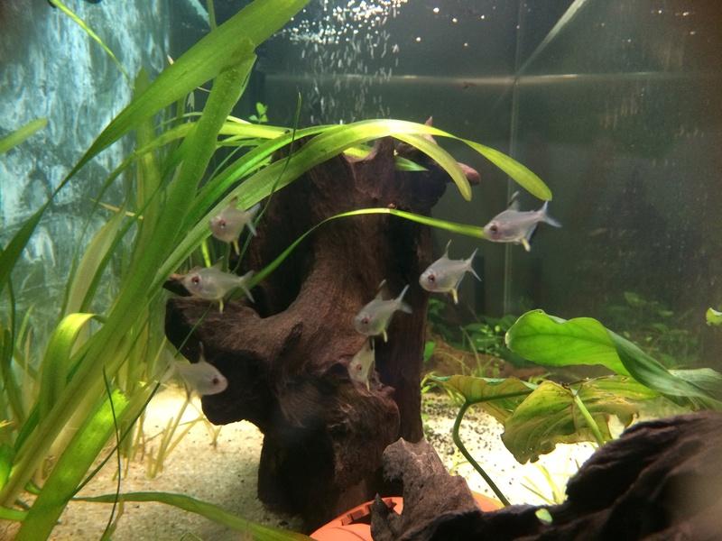 Des nouvelles de mes bacs et de l'aquariophilie en général  !(avec photos) Img_0819