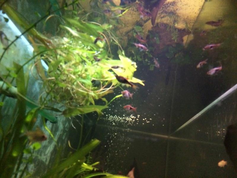 Des nouvelles de mes bacs et de l'aquariophilie en général  !(avec photos) Img_0820