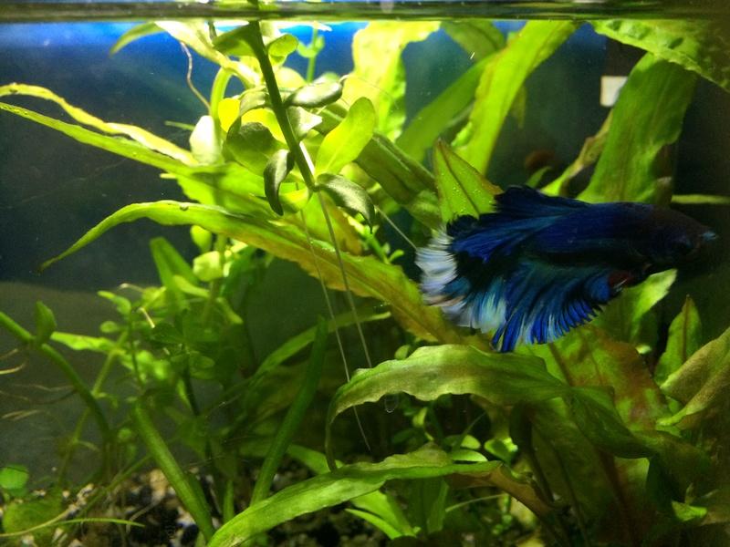 Des nouvelles de mes bacs et de l'aquariophilie en général  !(avec photos) Img_0822