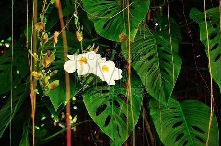 Qui suis-je ? (Avis aux amateurs de botanique.) Santia10