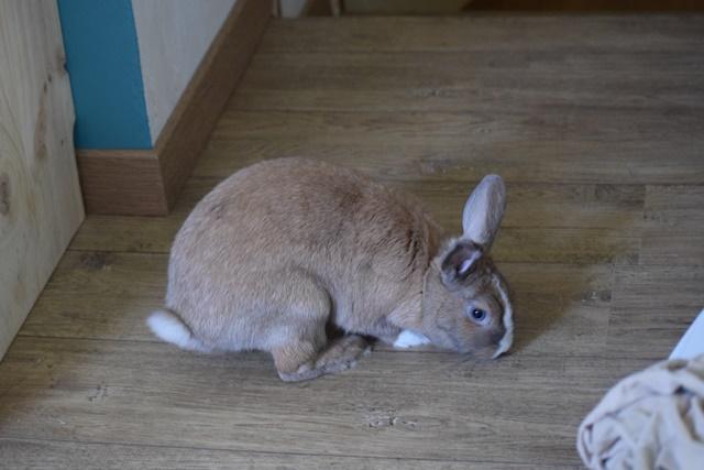 Basile, mâle, lapin, né le 01/06/14  - Page 2 Dsc_0012