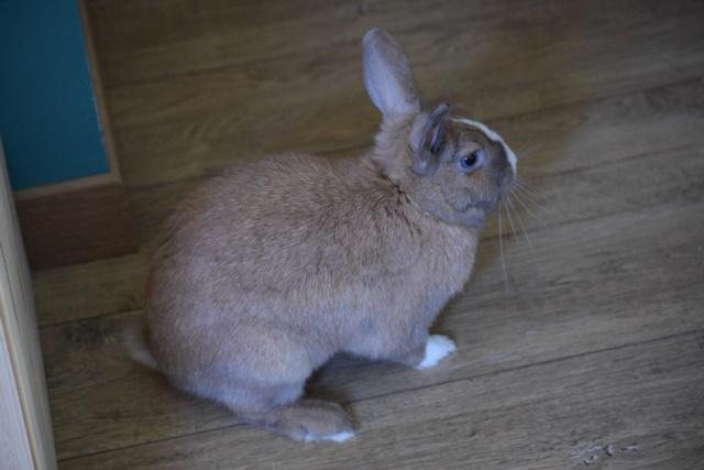 Basile, mâle, lapin, né le 01/06/14  - Page 2 Dsc_0013
