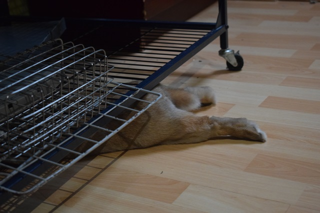 Basile, mâle, lapin, né le 01/06/14  - Page 2 Dsc_0027