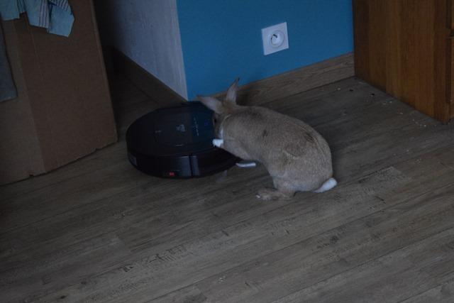 Basile, mâle, lapin, né le 01/06/14  - Page 2 Dsc_0032