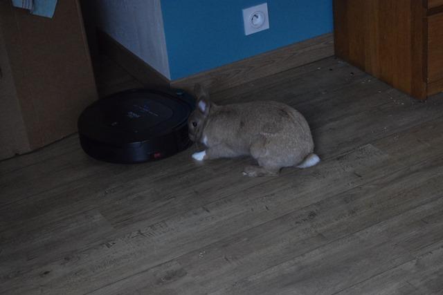 Basile, mâle, lapin, né le 01/06/14  - Page 2 Dsc_0034