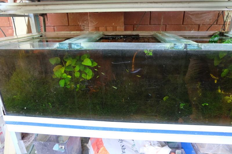 Reproduction petits poissons Dscf5811