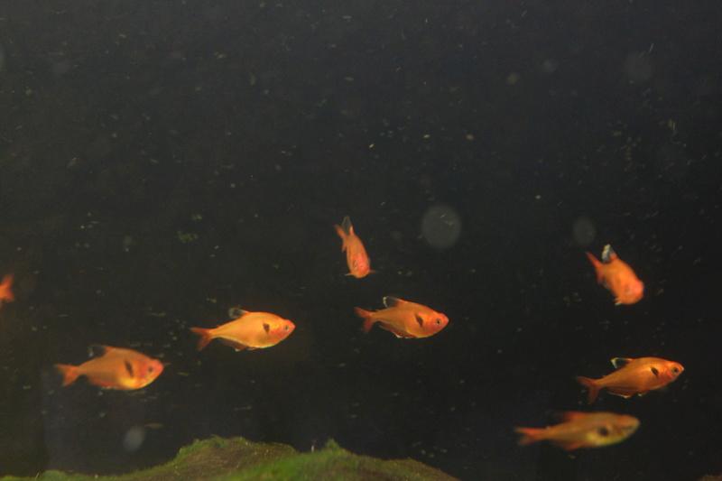 Reproduction petits poissons Dscf6310