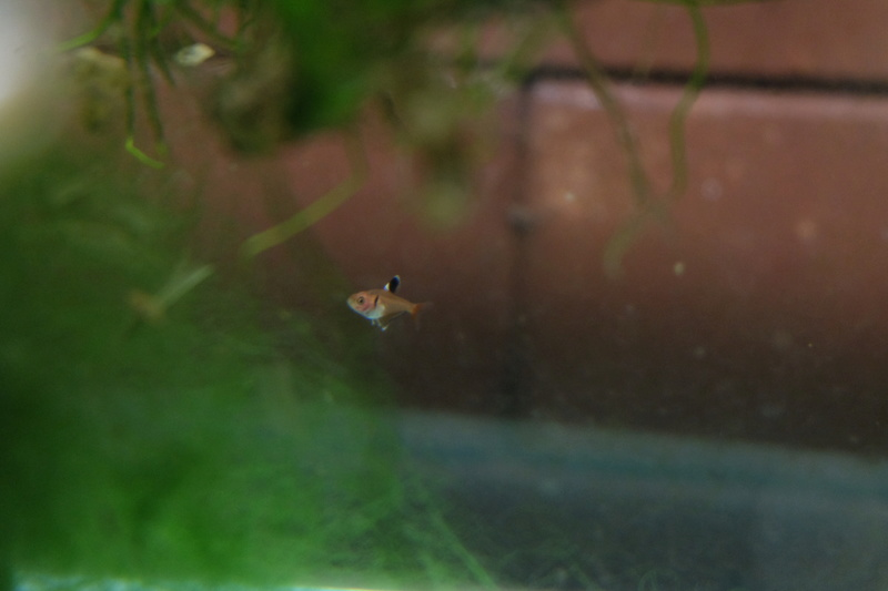Reproduction petits poissons Dscf6311
