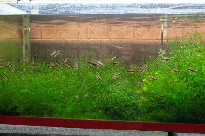 Reproduction petits poissons Dscf6313