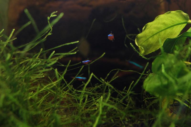 Reproduction petits poissons Dscf6314