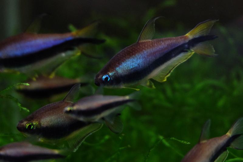 Reproduction petits poissons Dscf6410