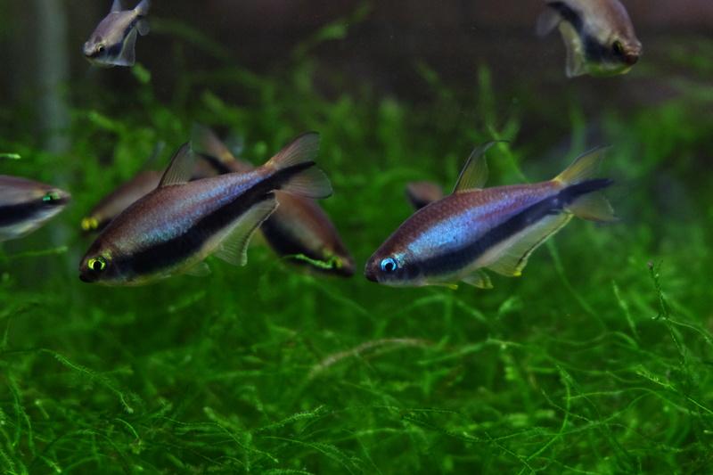 Reproduction petits poissons Dscf6412