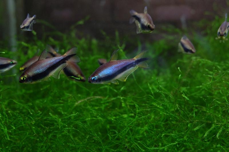 Reproduction petits poissons Dscf6414