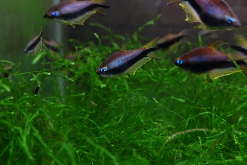 Reproduction petits poissons Dscf6416