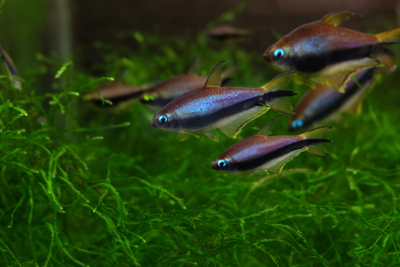 Reproduction petits poissons Dscf6417