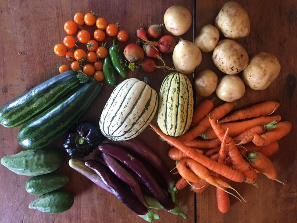 Monthly Avatar: September, Show Off Your Garden Harvest! - Page 6 0b44be10