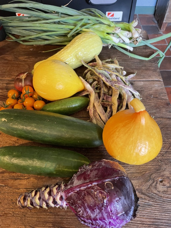 What Have You Picked From Your Garden Today - Page 9 Ddcfc310