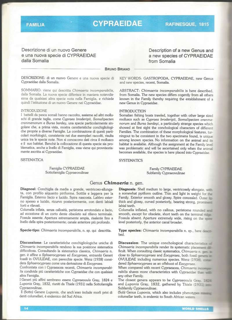 Sphaerocypraea incomparabilis - (Briano, 1993) B110