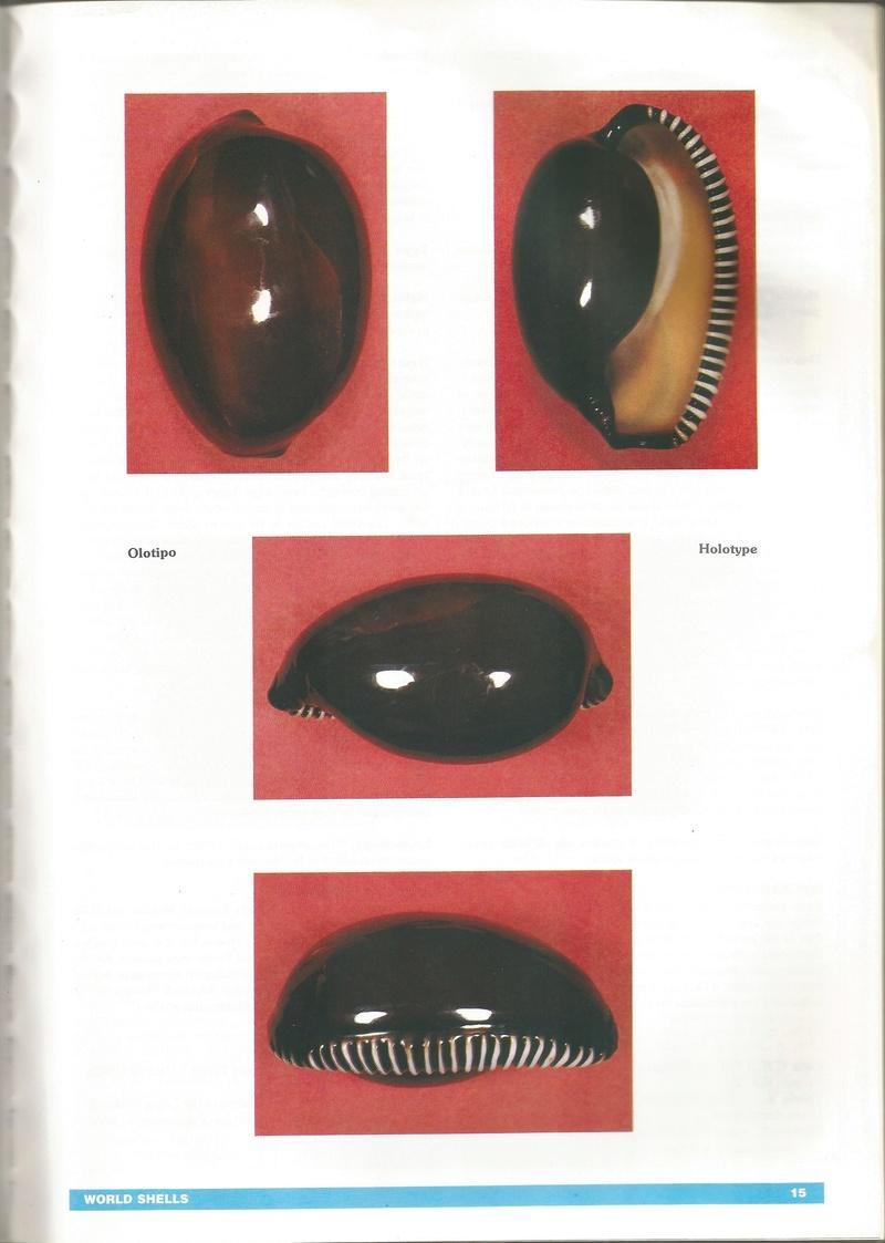 Sphaerocypraea incomparabilis - (Briano, 1993) B210