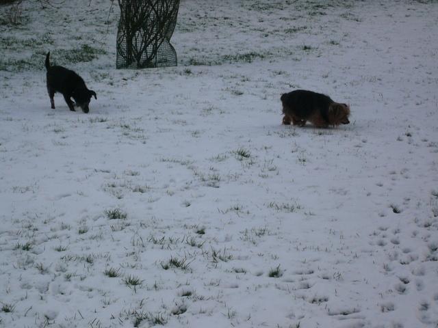 Il a neigé ! Neige_12