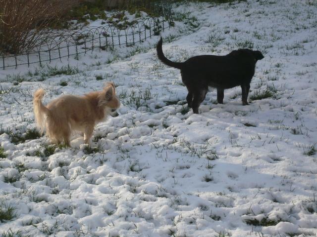 Il a neigé ! Neige_14