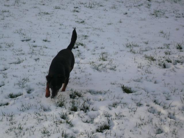 Il a neigé ! Neige_16