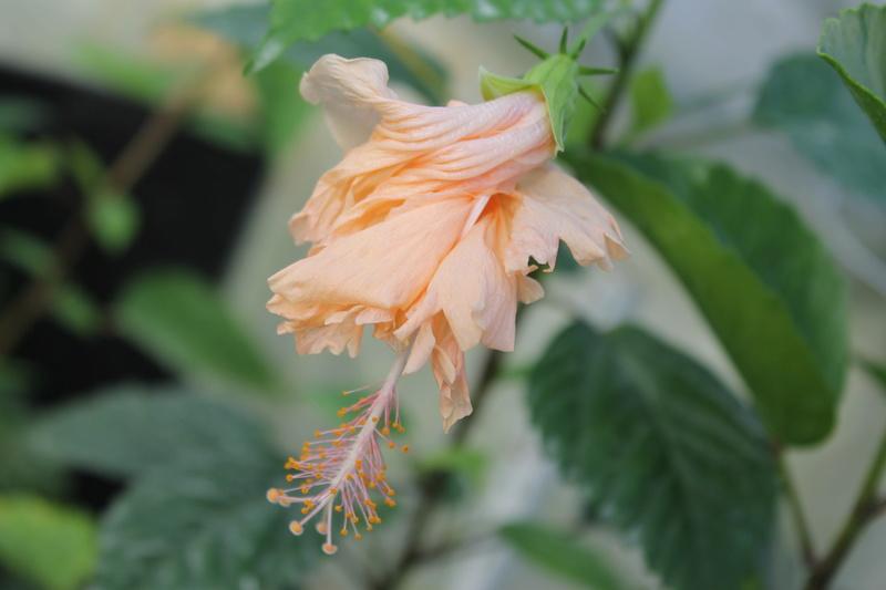 floraisons d'octobre - Page 15 Img_4618