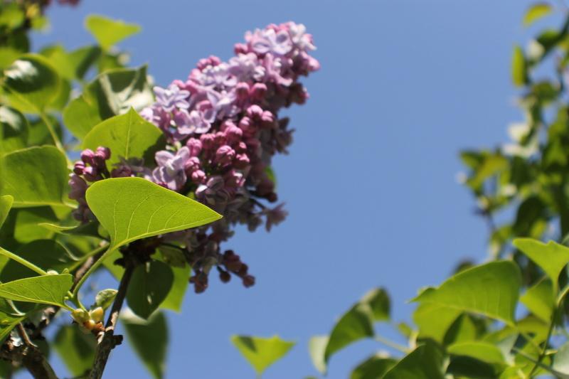 Floraisons du mois d'avril - Page 20 Img_4718
