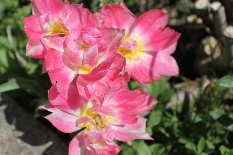 Floraisons du mois d'avril - Page 20 Img_4719