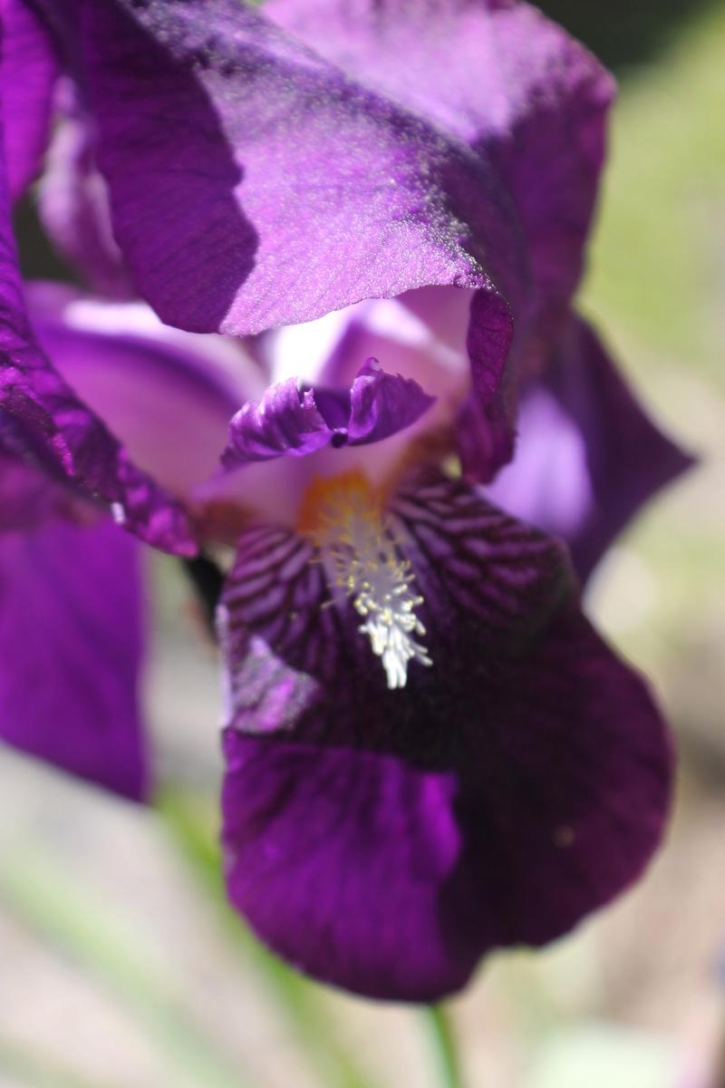 Floraisons du mois d'avril - Page 20 Img_4720