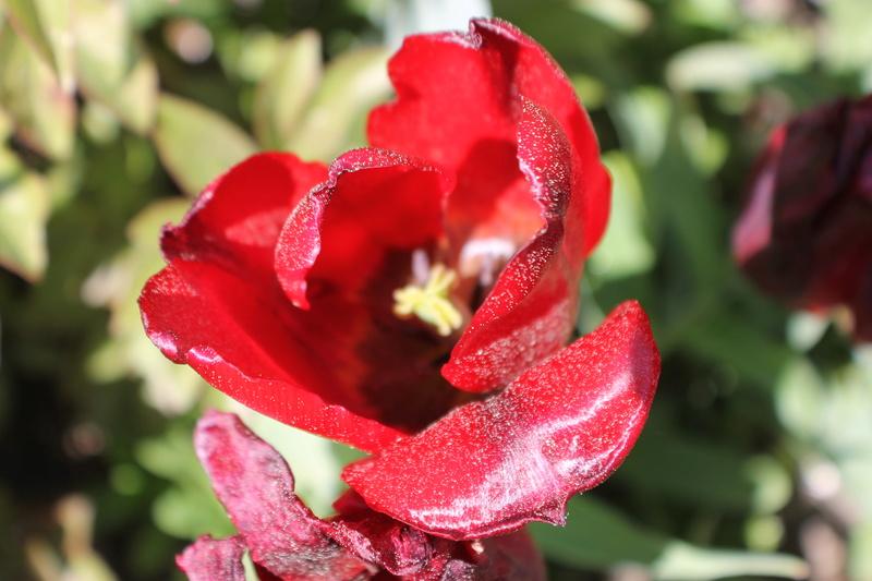 Floraisons du mois d'avril - Page 20 Img_4721