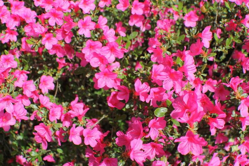 Floraisons du mois d'avril - Page 20 Img_4734
