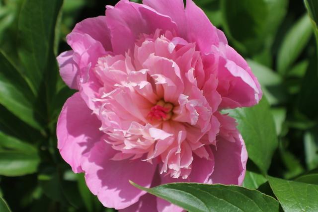 Floraisons du mois de Mai - Page 24 Img_4767
